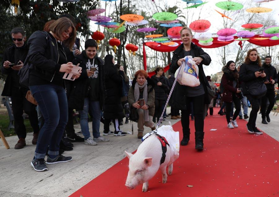 A woman brings her pet pig to participate in activities to celebrate Lunar New Year in Rome on Sunday. (PHOTO/XINHUA)