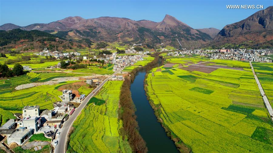 Aerial photo taken on Feb. 10, 2019 shows cole flowers beside the Jiulong River in Luoping County, southwest China\'s Yunnan Province. (Xinhua/Mao Hong)