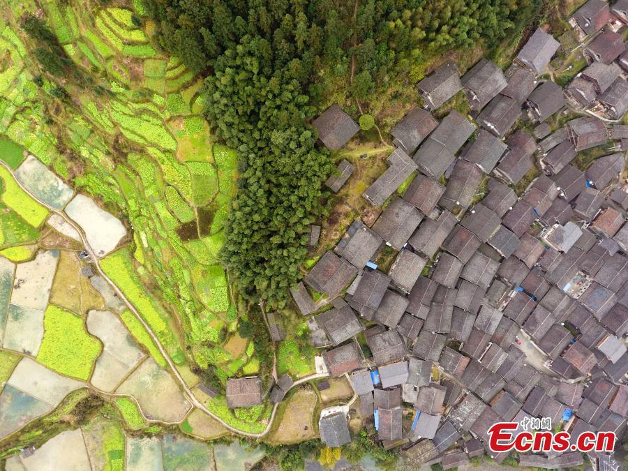 An aerial photo of the picturesque Wugong Dong Village in Rongjiang County, Guizhou Province, Feb. 13, 2019. The village, home to 171 Dong families, has well-preserved old wooden buildings that are now surrounded by cauliflowers in bloom. The village was inscribed as a national traditional village in 2016. (Photo: China News Service/He Junyi)