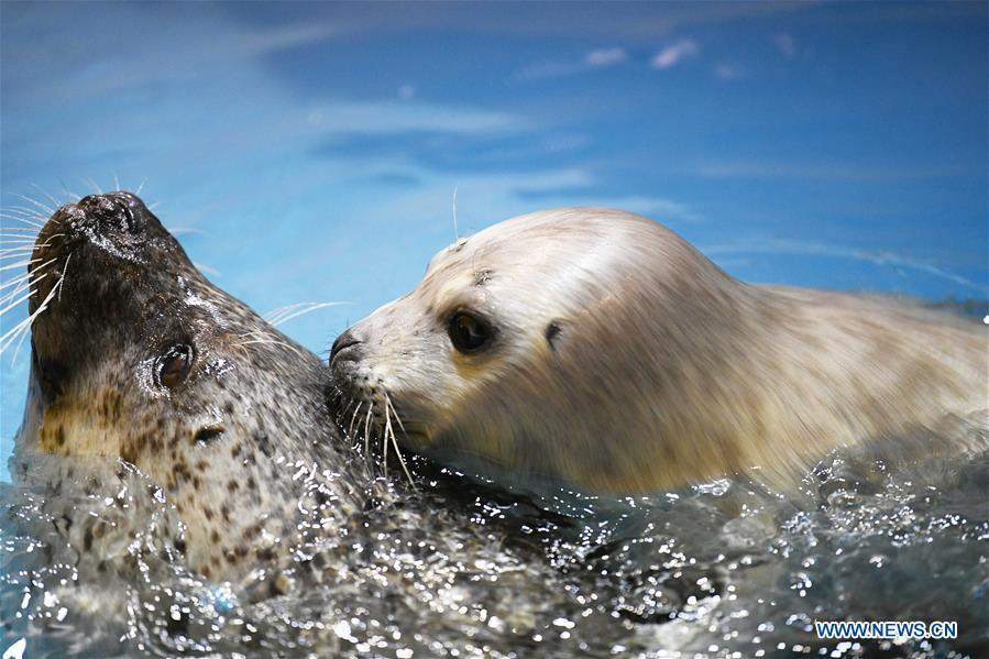 Photo taken on Feb. 13, 2019 shows a seal cub and its mother at Harbin Polarland in northeast China\'s Heilongjiang Province. Seal \