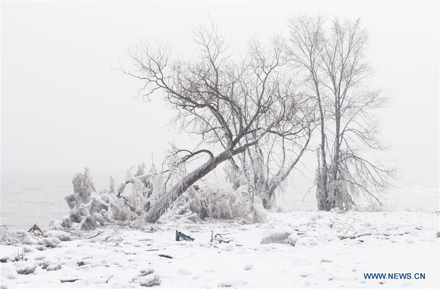 An ice-covered tree leans down near Lake Ontario in Toronto, Canada, on Feb. 13, 2019. A winter storm of a mix of snow, freezing rain and strong winds hit the Greater Toronto Area from Tuesday to Wednesday. (Xinhua/Zou Zheng)