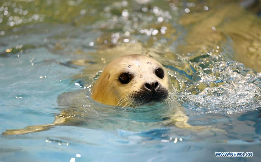 Photo taken on Feb. 13, 2019 shows a seal cub at Harbin Polarland in northeast China\'s Heilongjiang Province. Seal \