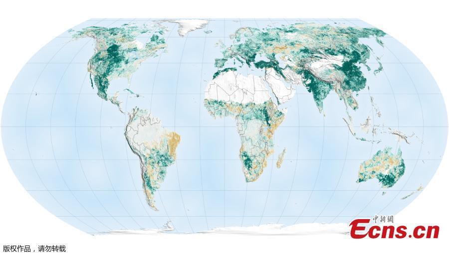 Satellite data show that China and India have led the global increase in leafy coverage in recent years. (Photo/Agencies)