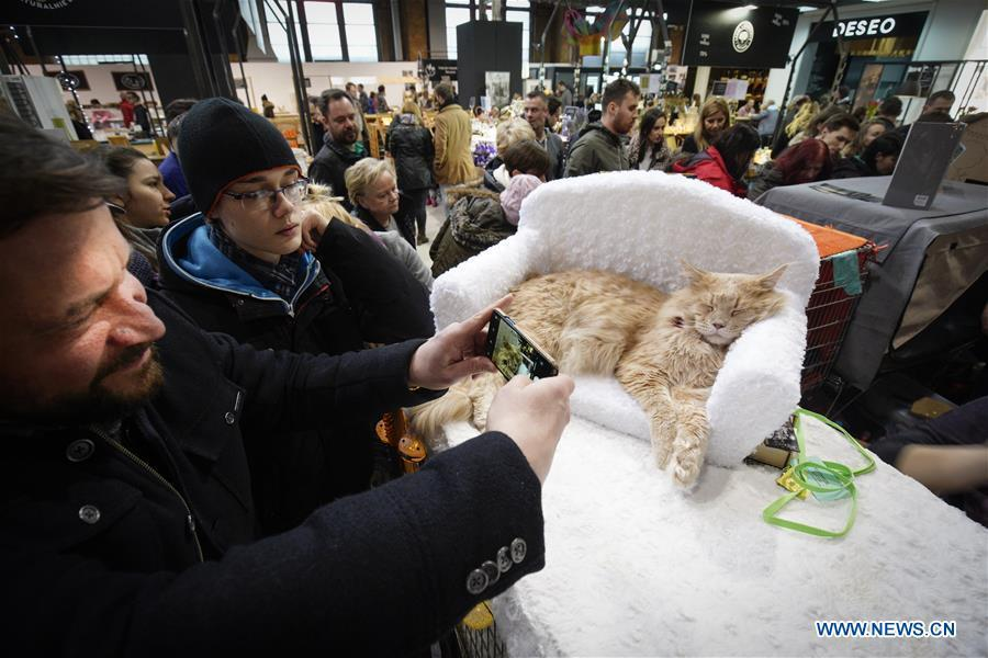 A man takes photos of a cat during a cat exhibition in Warsaw, Poland, on Feb. 17, 2019. (Xinhua/Jaap Arriens)