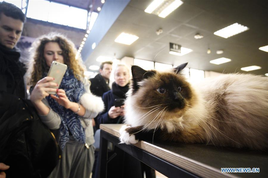 A woman takes photos of a cat during a cat exhibition in Warsaw, Poland, on Feb. 17, 2019. (Xinhua/Jaap Arriens)