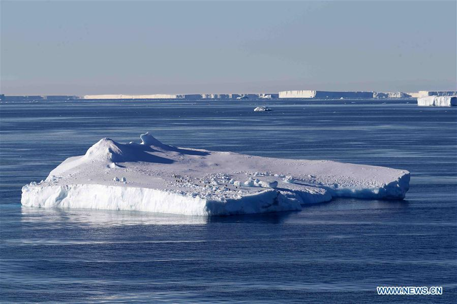 Photo taken on Feb. 15, 2019 shows icebergs in waters near the West Ice Shelf in Antarctica. China\'s research icebreaker Xuelong, with 126 crew members aboard on the 35th Antarctic research mission, on Thursday local time left the Zhongshan Station on its way back to China. It is expected to arrive in Shanghai in mid-March. (Xinhua/Liu Shiping)