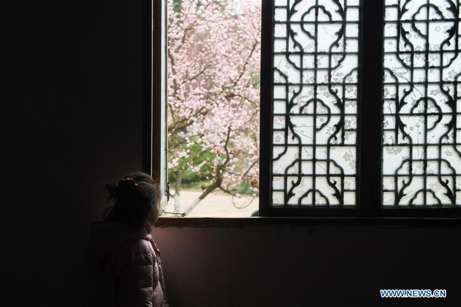 A child enjoys plum flowers at a botanical garden in Hefei, capital of east China\'s Anhui Province, Feb. 16, 2019. (Xinhua/Zhang Duan)