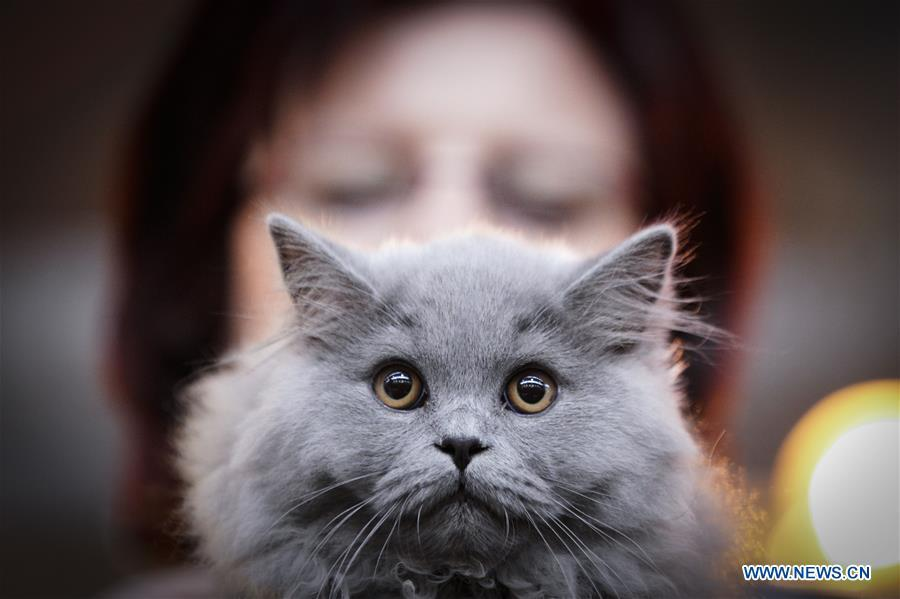 A cat is seen during a cat exhibition in Warsaw, Poland, on Feb. 17, 2019. (Xinhua/Jaap Arriens)