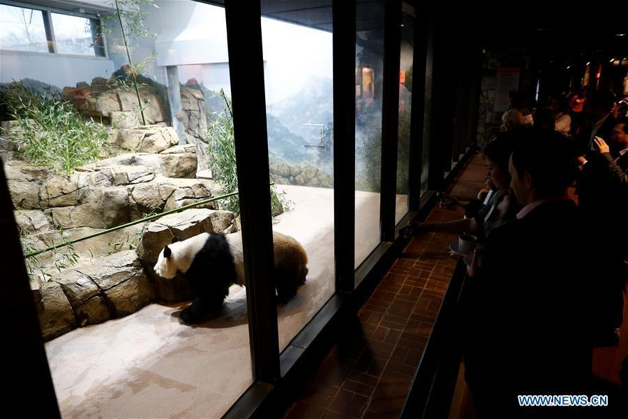 Giant Panda Mei Xiang plays in the giant panda house at the Smithsonian\'s National Zoo in Washington D.C., the United States, on Feb. 23, 2019. The Smithsonian\'s National Zoo in Washington D.C. held a housewarming event inside the giant panda house on Saturday to celebrate the completion of a new visitor exhibit. (Xinhua/Ting Shen)