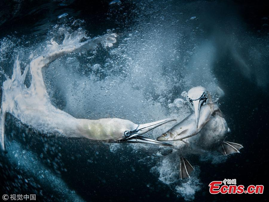 The 2019 Sony World Photography Awards (SWPA) announced winners of its Open competition category and National Awards, Feb. 26, 2019.  Winners of the Open competition were named in 10 categories and they were judged on a single exceptional image.   (Photo/VCG)
