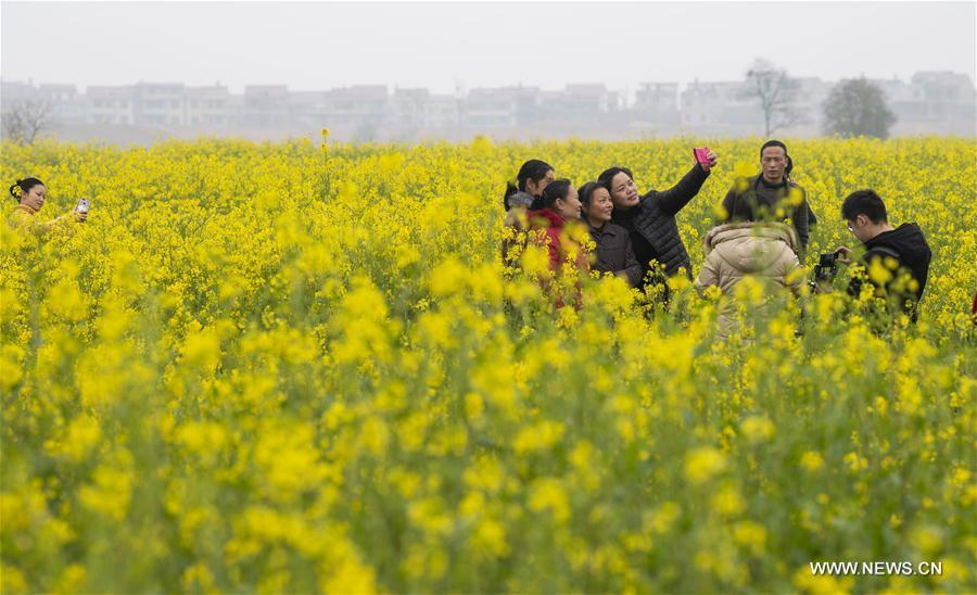 Tourists take selfies in cole flower fields at Longweizhou Village of Xinxi Township in Xinyu City, east China\'s Jiangxi Province, Feb. 26, 2019. (Xinhua/Zhao Chunliang)