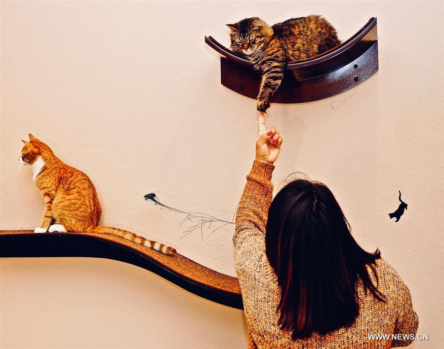 A customer interacts with adoptable cats at Catopia Cat Cafe in Albuquerque, New Mexico, the United States on Feb. 24, 2019. Customers at Catopia Cat Cafe, having only been open for a few months in Albuquerque in the U.S. state of New Mexico, can spend as much time as they want with about a dozen adoptable cats while having coffee and browsing the web. Internet coffee shops that have cats up for adoption is a new trend in the United States today, and there are about one hundred cat cafes around the country. (Xinhua/Richard Lakin)