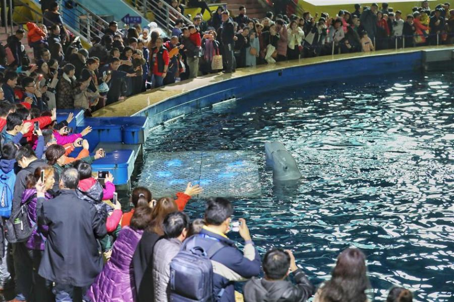 Little White and Little Grey meet audience members in Shanghai for the last time, Feb. 28, 2019. (Photo/Shine.cn)