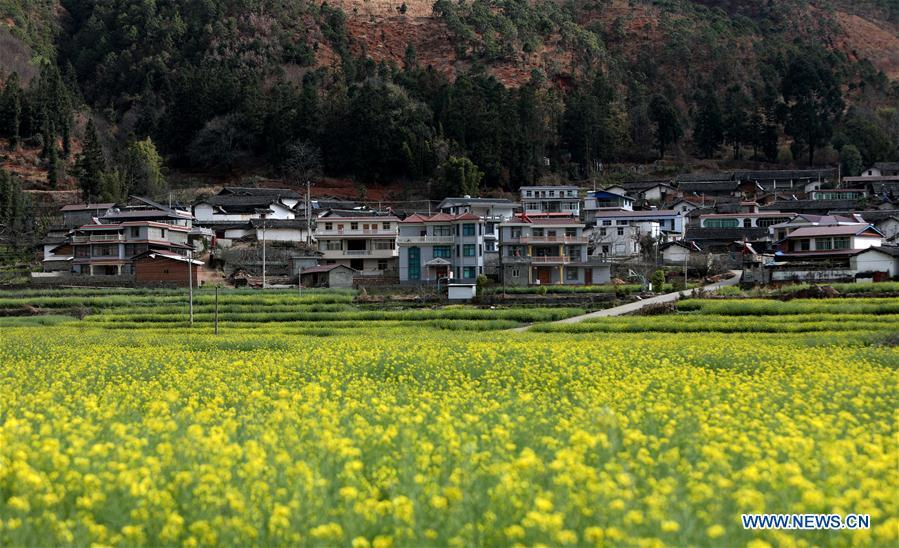 Photo taken on Feb. 19, 2019 shows the cole flower fields in Puwei Township of Panzhihua City, southwest China\'s Sichuan Province. As \