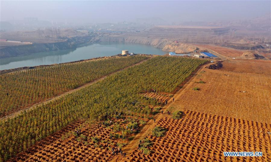 Aerial photo taken on Nov. 25, 2018 shows villagers planting trees on iron core scrapyard in Liuzhuangzi Village of Qian\'an City, north China\'s Hebei Province. As \