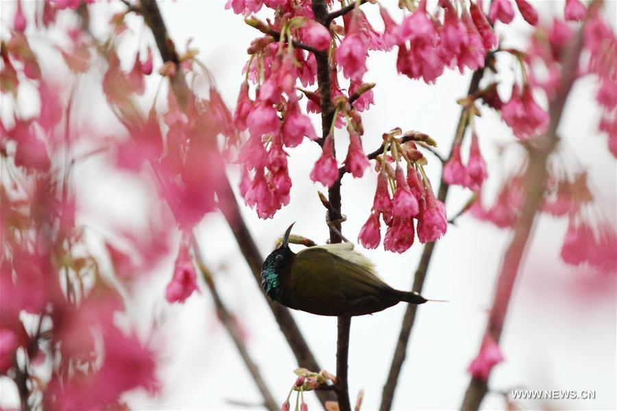 <?php echo strip_tags(addslashes(A bird is seen on a flowering tree in Daoxian County of Yongzhou, central China's Hunan Province, March 2, 2019. (Xinhua/He Hongfu))) ?>