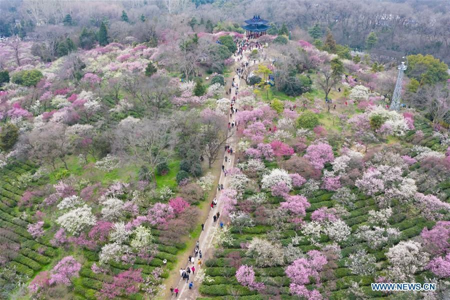 Aerial photo taken on March 3, 2019 shows tourists visiting the Meihuashan (Plum Blossom Hill) scenic area in Nanjing, east China\'s Jiangsu Province. People go out to enjoy the scenery of flowers in blossom as temperature rises in many parts of China in early spring. (Xinhua/Su Yang)