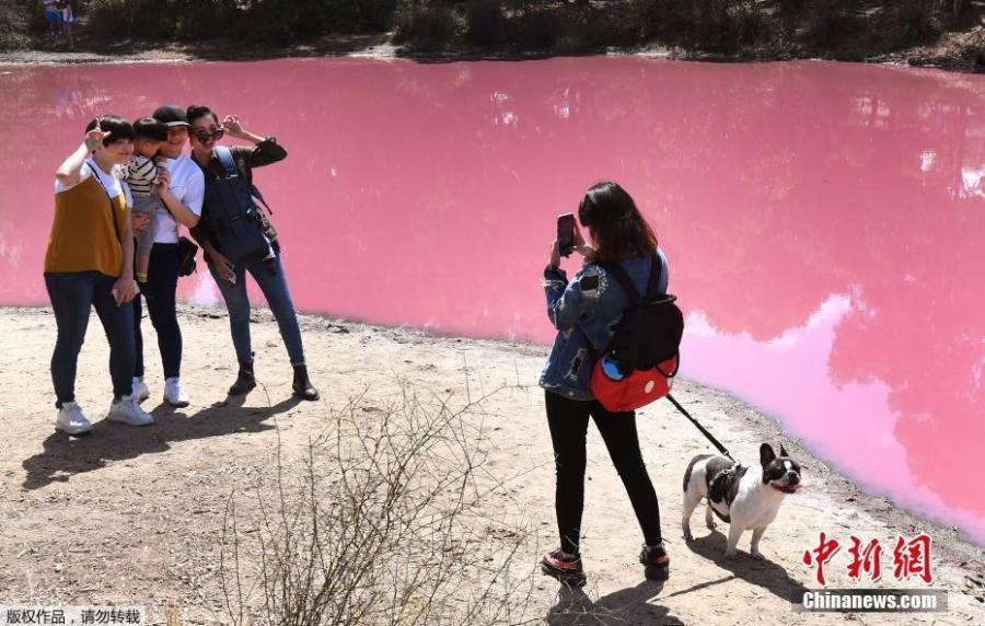 The salt lake of the Westgate Park in Melbourne, Australia, has attracted many visitors after it turned a vivid pink, March 4, 2019. Though at first it looks like toxic pollution, the change in the lake\'s color is actually due to a natural phenomenon. Due to the warm temperature and extreme salt levels, green algae at the bottom of the lake multiplied quickly, producing a pink pigment during its photosynthetic process.   (Photo/Agencies)