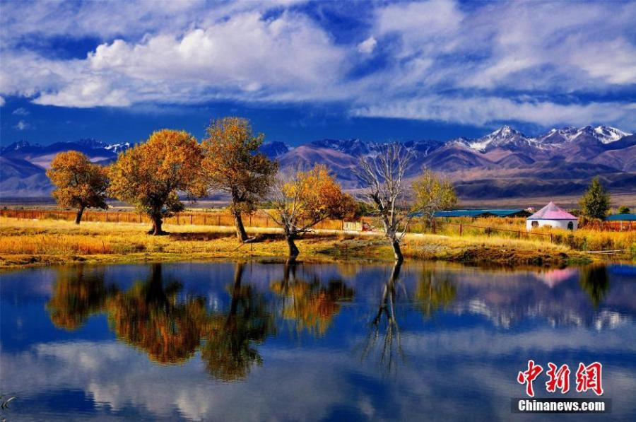Photo taken on March 5, 2019 shows Euphrates poplar trees in Bayingolin Mongol Autonomous Prefecture, Northwest China\'s Xinjiang Uygur Autonomous Region. (Photo: China News Service/Wang Jianxin)