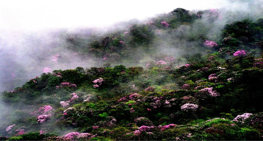 Fanjing Mountain was added to UNESCO\'s World Natural Heritage list in July 2018.  (Photo provided to chinadaily.com.cn)