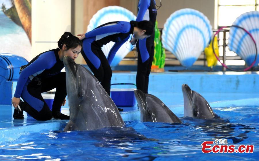 Trainer Sun Liru takes part in a dolphin show with colleagues at an aquarium in Hefei City, Anhui Province, March 5, 2019. Sun said she chose the job because she has loved animals since she was a child. She has been training dolphins for four years. (Photo: China News Service/Han Suyuan)