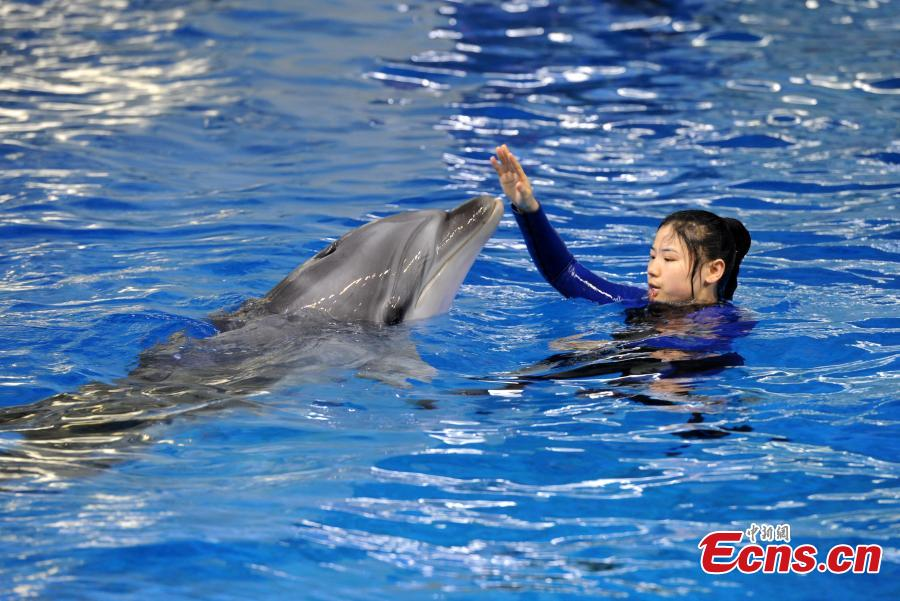 Trainer Sun Liru trains with a dolphin at an aquarium in Hefei City, Anhui Province, March 5, 2019. Sun said she chose the job because she has loved animals since she was a child. She has been training dolphins for four years. (Photo: China News Service/Han Suyuan)