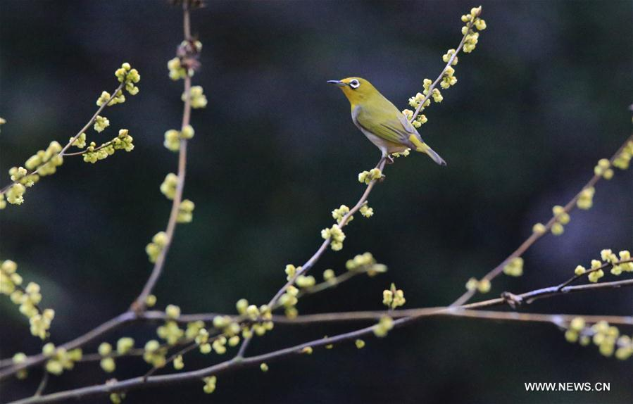 A bird stands on a tree branch at Wuxing Village in Yanfeng District of Hengyang City, central China\'s Hunan Province, on March 6, 2019. This Wednesday marked the day of \