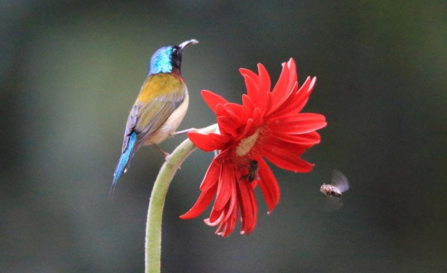 A bird perches on a flower branch in Wuxing village, Hengyang city, in Central China\'s Hunan Province, March 6, 2019. With Wednesday marking jingzhe, or the \