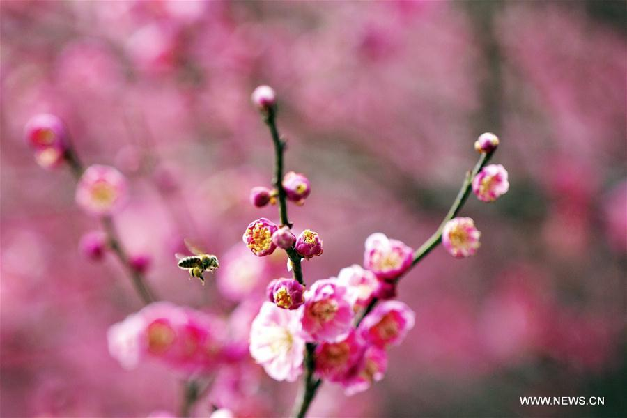 A bee flies among flowers in Zigui County, central China\'s Hubei Province, on March 6, 2019. This Wednesday marked the day of \
