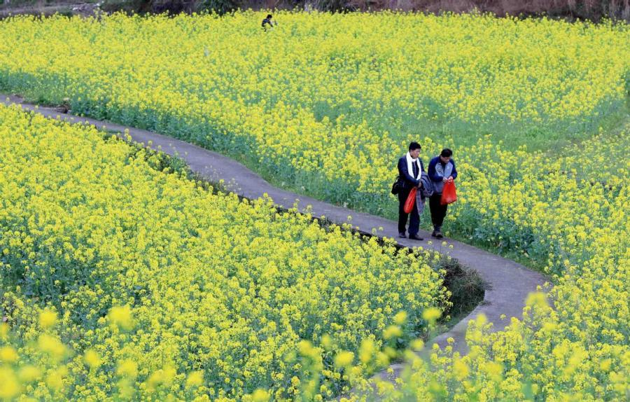 People stroll in a canola flower field in Changfeng village, Southwest China\'s Guangxi Zhuang autonomous region, March 6, 2019. (Photo/Asianewsphoto)