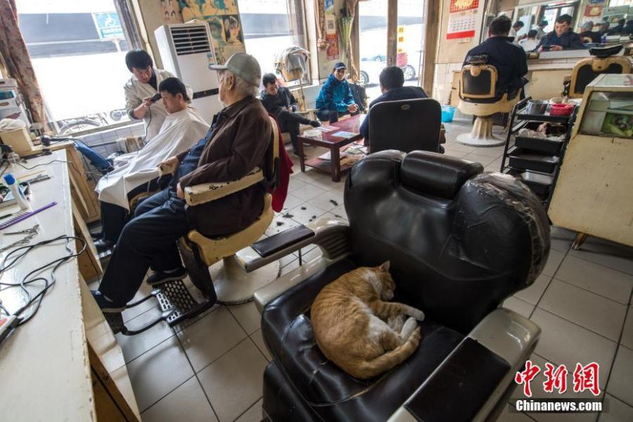 Customers wait to have a haircut at the only state-owned barbershop in Taiyuan City, Shanxi Province, March 8, 2019. March 8 marks traditional Chinese festival Long Tai Tou (dragon head raising), which refers to the start of spring and farming. During the festival, held on the second day of the second month of the lunar calendar, people play dragon lanterns, eat noodles, shave their hair, and pray for luck. (Photo: China News Service/Wu Juneji)