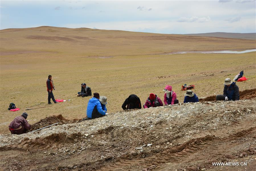File photo shows research team members working during the second expedition at the Lunpola Basin in southwest China\'s Tibet Autonomous Region. The discovery of fossilized palm leaves on the cold and high-altitude Qinghai-Tibet Plateau has led scientists to make new conclusions on when the plateau reached its current height. Su Tao, a leading scientist of the study from Xishuangbanna Tropical Botanical Garden, said the central part of the plateau did not reach its current altitude of about 4,500 meters until 23 million years ago. The conclusion challenges the prevailing view that the process happened about 35 million years ago, Su said. He said the judgment was based on the discovery of well-preserved palm fossils at the Lunpola Basin in central Tibet. By simulating a variety of topographic scenarios, the research team conjectured that about 25 million years ago, palm trees grew at a west-to-east valley flanked by high mountains in the central part of the plateau. (Xinhua/Su Tao)