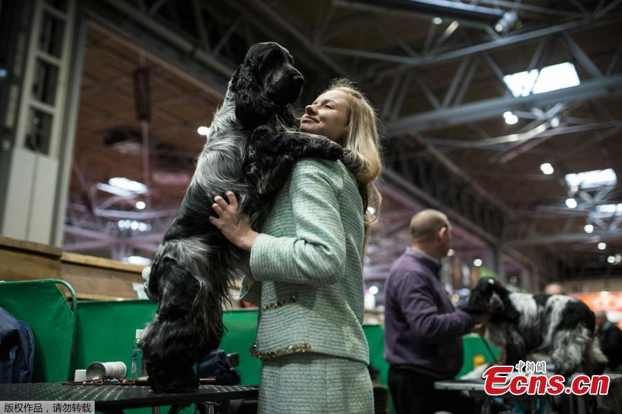 A woman cuddles her Cocker Spaniel during the first day of the Crufts Dog Show in Birmingham, Britain, March 7, 2019. (Photo/Agencies)