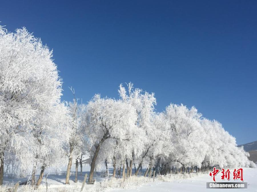 A hoar frost turns trees into a natural wonder on a snow field in Fuyun County, Northwest China\'s Xinjiang Uygur Autonomous Region, March 11, 2019.  The county has increased its efforts to develop tourism projects using its rich snow and ice resources. (Photo: China News Service/Hu Jinliang)