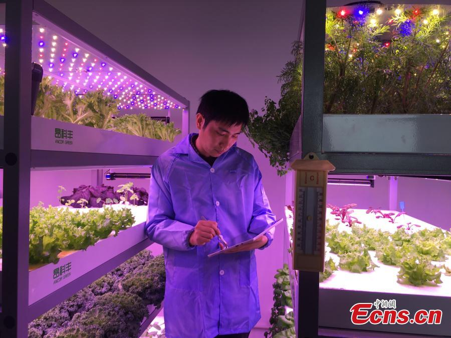 A view of vegetables growing in a plant farm belonging to the Institute of Advanced Technology at the University of Science and Technology of China in Hefei, Anhui Province, March 11, 2019. The farm, housed inside a closed container, uses artificial lighting to help the vegetables grow well. Dr. Zhang Fangxin, the general manager of Anhui Angkefeng Photoelectric Technology, said the system allows plants to grow well even when placed in an underground space. (Photo: China News Service/Wu Lan)