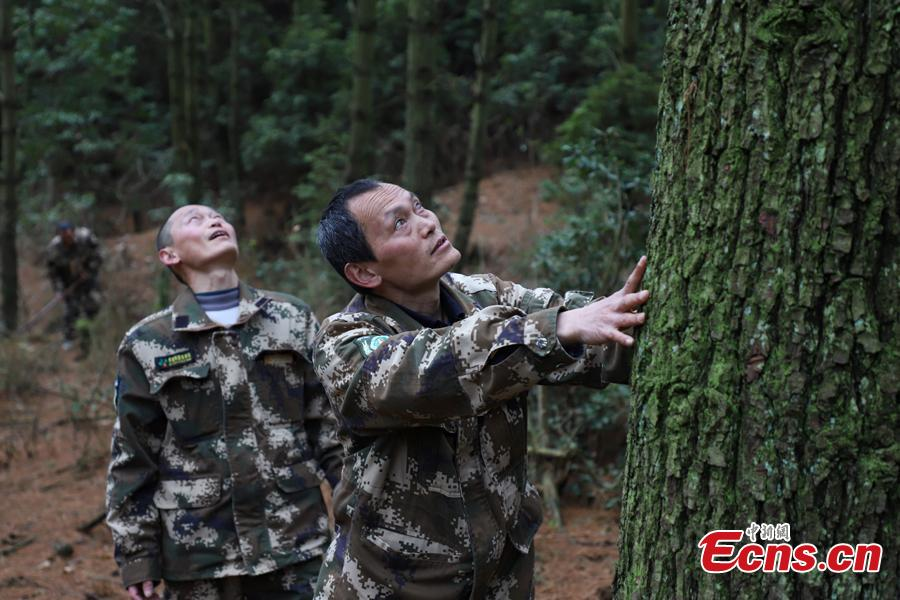 Zhang Zhong (R) and his brother Zhang Jian, two of three triplet brothers, check the health of a tree in the Gonglongping state-owned tree farm in Bijie City, Guizhou Province, March 10, 2019. Influenced by their father, the three brothers began to work as rangers in the farm in 1981. The tree farm covers an area of 53,300 mu (3,553 hectares) and the brothers usually walk approximately 30 kilometers on average per working day. Guizhou has about 3,000 registered rangers who work in tree farms totalling 5.55 million mu. (Photo: China News Service/Qu Honglun)