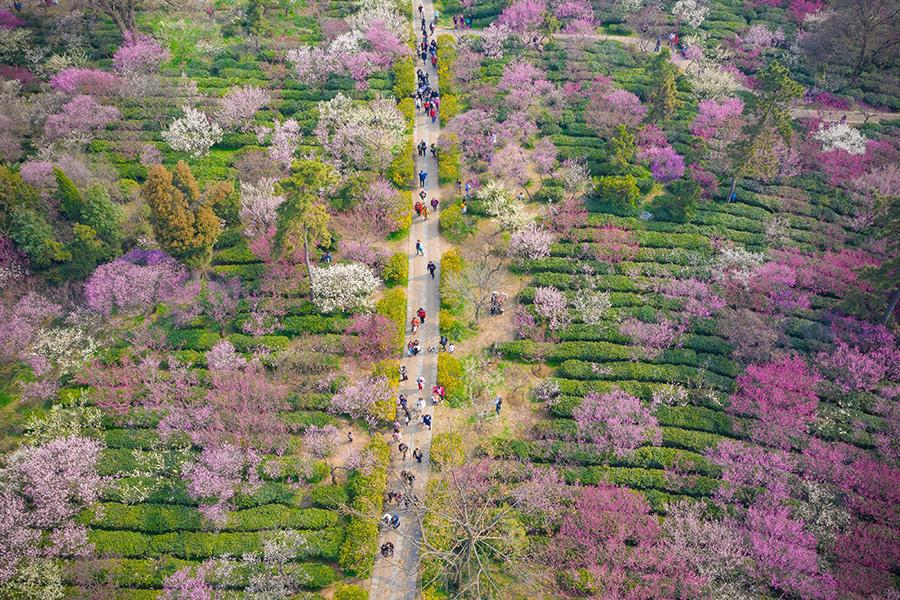 Visitors enjoy a spring outing on Meihua Mountain, Nanjing city, Jiangsu Province, Mar. 10, 2019. Blooming flowers and leaves on the trees give the new season some fresh color. (Photo/Asianewsphoto)