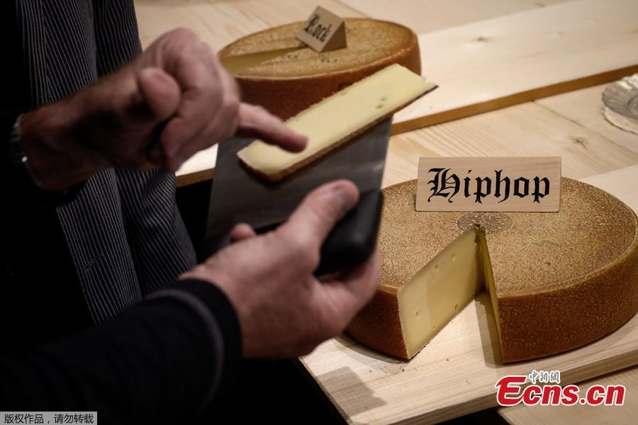 This picture taken on March 14, 2019 shows a round of cheese that has been matured for 6 month with hip hop music, on the final day of an experiment conducted by the University of the Arts in Berthoud, in the Emmental region, central Switzerland. Beat Wampfler, a Swiss veterinarian by day, but consumate apron-wearing cheese enthusiast at night, has embarked on an experiment to test the impact of music on Emmental. Since last September, the cheeses have each been blasted with sonic masterpieces from the likes of rock gods Led Zeppelin or hip-hop legends A Tribe Called Quest to techno beats, ambient choirs and Mozart\'s classic Magic Flute. A jury of expert tasted the cheeses on March 14, 2019 and the tasty winner the cheese matured with the hip-hop album. (Photo/Agencies)
