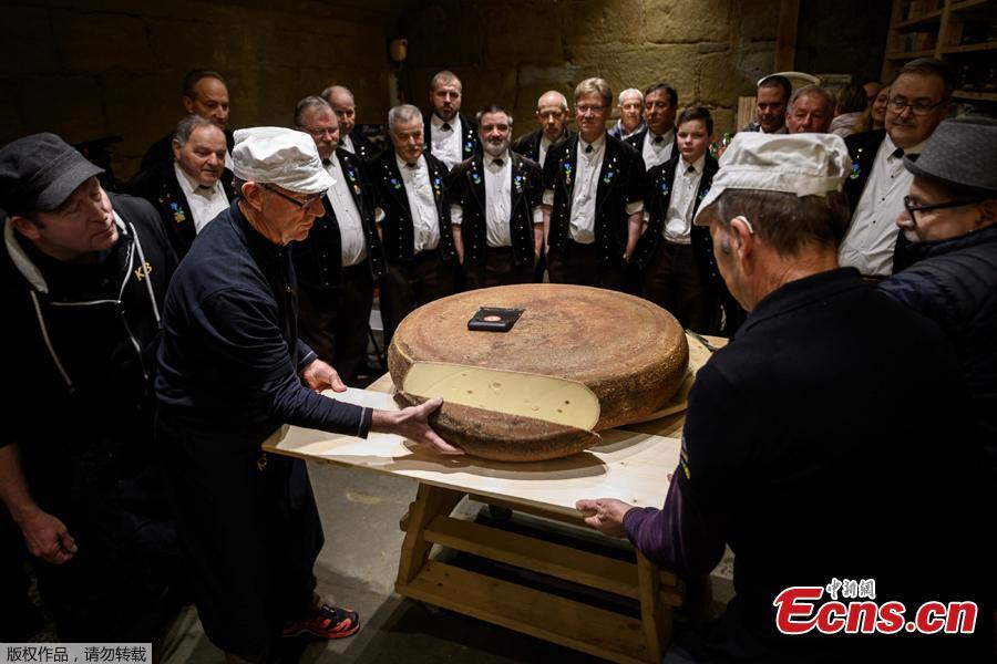 A giant round of Emmental cheese is cut in front of yodelers on the final day of an experiment conducted by the University of the Arts on March 14, 2019 in Berthoud, in the Emmental region, central Switzerland. Beat Wampfler, a Swiss veterinarian by day, but consumate apron-wearing cheese enthusiast at night, has embarked on an experiment to test the impact of music on Emmental. Since last September, the cheeses have each been blasted with sonic masterpieces from the likes of rock gods Led Zeppelin or hip-hop legends A Tribe Called Quest to techno beats, ambient choirs and Mozart\'s classic Magic Flute. A jury of expert tasted the cheeses on March 14, 2019 and the tasty winner the cheese matured with the hip-hop album. (Photo/Agencies)