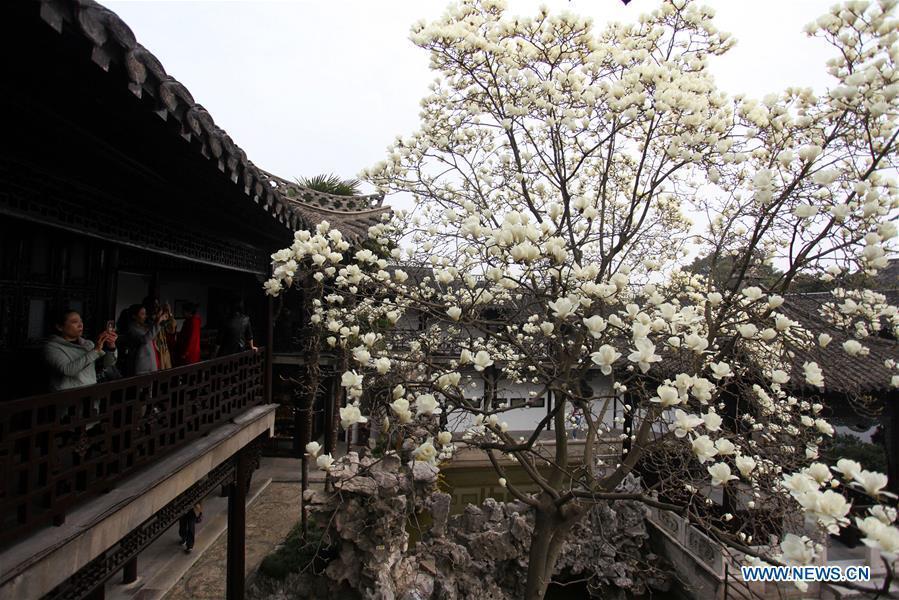 Tourists view magnolia flowers at Heyuan scenic spot in Yangzhou, east China\'s Jiangsu Province, March 18, 2019. (Xinhua/Meng Delong)