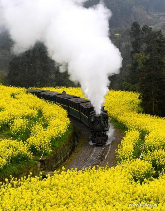 A Jiayang steam train runs on a narrow gauge railway in cole flower fields in Qianwei County, southwest China\'s Sichuan Province, March 20, 2019. The old-fashioned steam train, running on a narrow gauge railway in Qianwei County, serves mainly in sightseeing, but as increasing number of tourists visit the county in recent years, the train itself has become an attraction providing a journey of reminiscence. (Xinhua/Chen Tianhu)