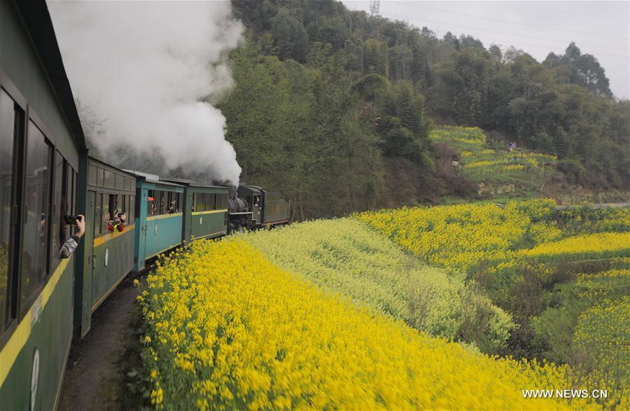 A Jiayang steam train runs on a narrow gauge railway in cole flower fields in Qianwei County, southwest China\'s Sichuan Province, March 20, 2019. The old-fashioned steam train, running on a narrow gauge railway in Qianwei County, serves mainly in sightseeing, but as increasing number of tourists visit the county in recent years, the train itself has become an attraction providing a journey of reminiscence. (Xinhua/Jiang Hongjing)