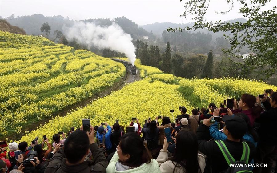 Tourists take photos of a Jiayang steam train running on a narrow gauge railway in cole flower fields in Qianwei County, southwest China\'s Sichuan Province, March 20, 2019. The old-fashioned steam train, running on a narrow gauge railway in Qianwei County, serves mainly in sightseeing, but as increasing number of tourists visit the county in recent years, the train itself has become an attraction providing a journey of reminiscence. (Xinhua/Jiang Hongjing)