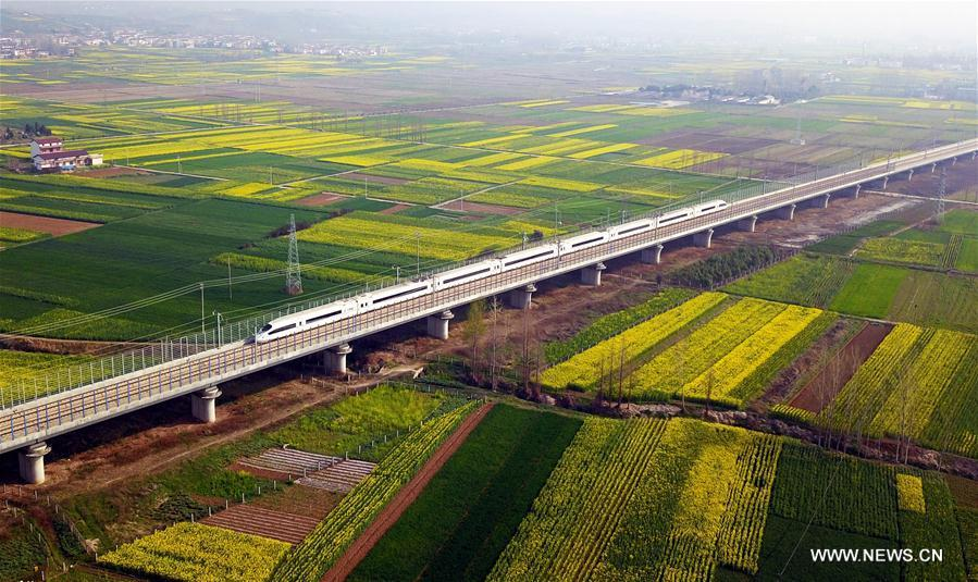 Aerial photo taken on March 20, 2019 shows a bullet train running through cole flower fields in Hanzhong, northwest China\'s Shannxi Province. (Xinhua/Tang Zhenjiang)