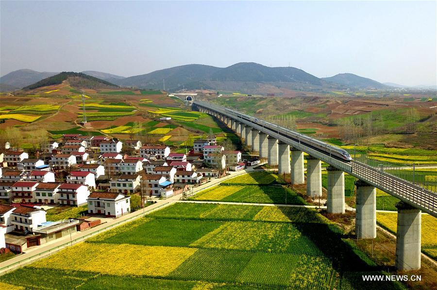 Aerial photo taken on March 20, 2019 shows a bullet train running in through cole flower fields in Hanzhong, northwest China\'s Shannxi Province. (Xinhua/Tang Zhenjiang)