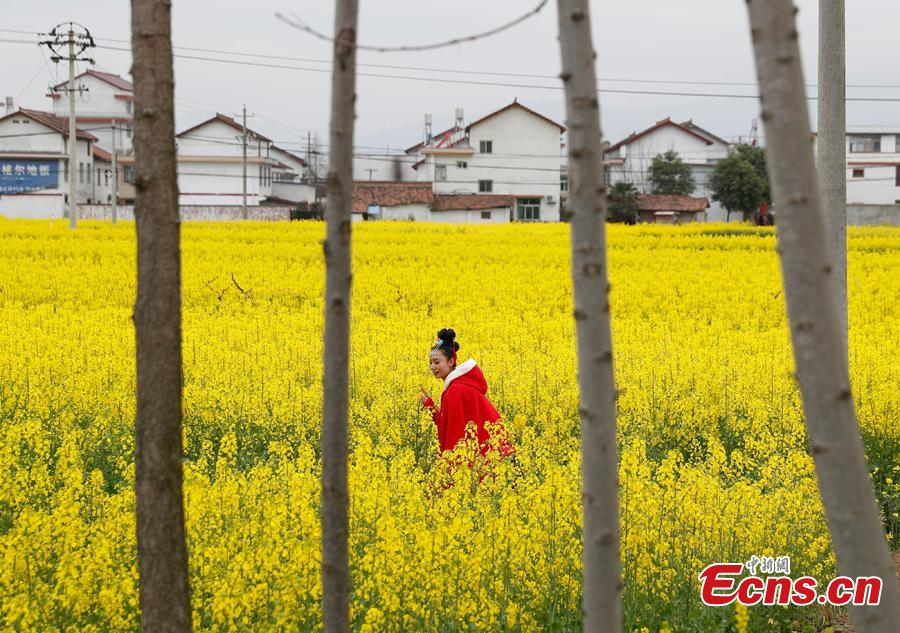 A girl walks in a cole flower field in Hanzhong City, northwest China\'s Shaanxi Province, March 22, 2019. Cole flowers are in full bloom in Hanzhong recently. (Photo: China News Service/Liu Guanguan)