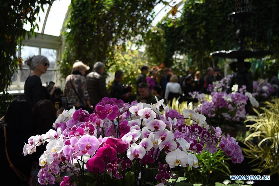 People visit the Orchid Show at New York Botanical Garden (NYBG) in New York, the United States, March 24, 2019. The Orchid Show themed Singapore showcases treasures from NYBG\'s exquisite orchid collection as well as Singapore\'s achievements in orchid cultivation, research and conservation. (Xinhua/Han Fang)