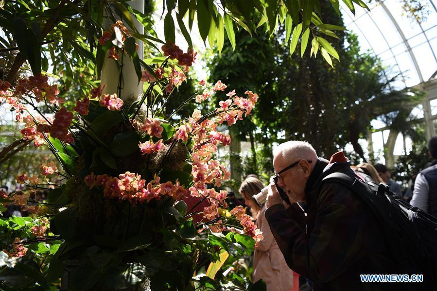 A visitor takes photos of orchids during the Orchid Show at New York Botanical Garden (NYBG) in New York, the United States, March 24, 2019. The Orchid Show themed Singapore showcases treasures from NYBG\'s exquisite orchid collection as well as Singapore\'s achievements in orchid cultivation, research and conservation. (Xinhua/Han Fang)