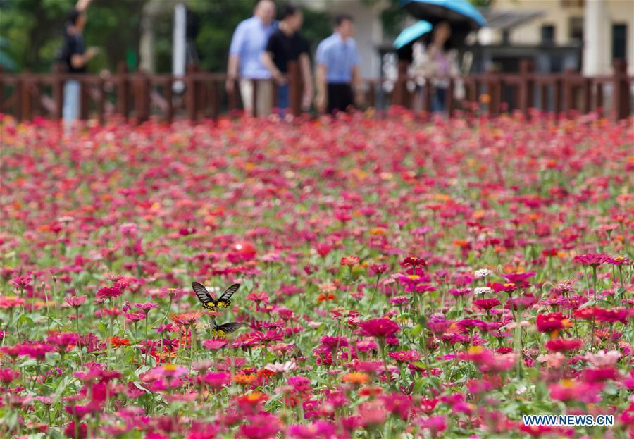 People visit a garden of Nanqiang Village, Boao Town, Qionghai City of south China\'s Hainan Province, March 25, 2019. Qionghai City has quickened its steps towards the construction of \