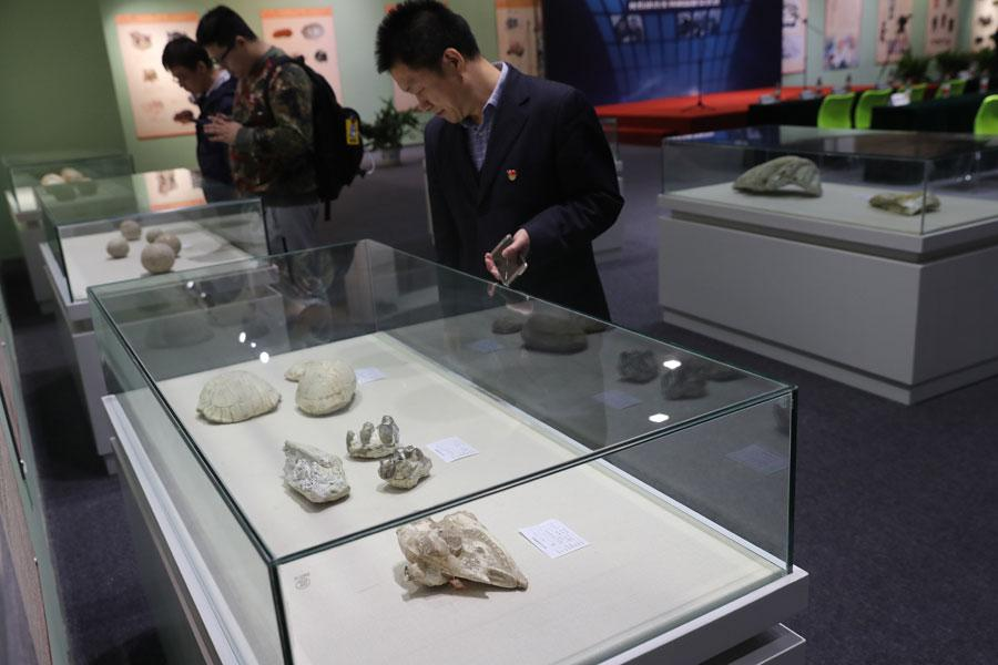 Beijing Customs has handed over 76 pieces of confiscated fossils and paleontological products to the Beijing Museum of Natural History on March 27, 2019.  (Photo/Asianewsphoto)